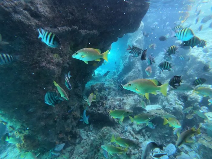 Thunderball Grotto, Boating in the Exumas with Sugar Adventures