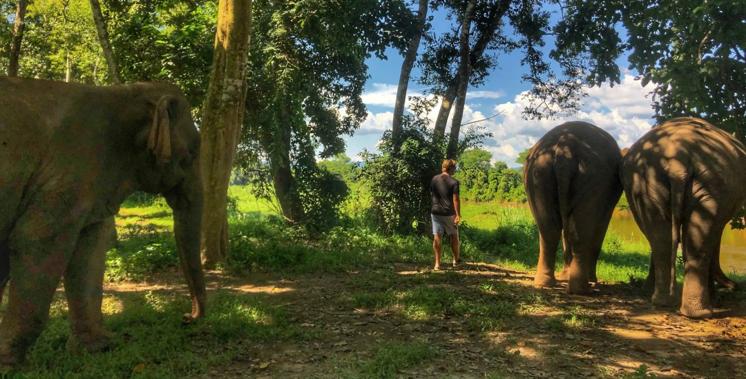 Anantara Golden Triangle Walking with Giants