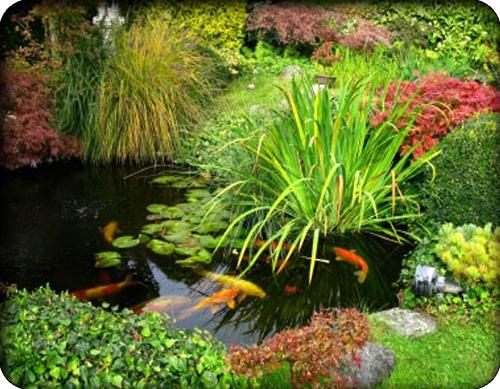 Agricultural Pond Liner