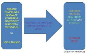 SEWAGE-ANAEROBIC-OXIDATION