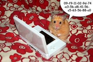 Hamster 09 Poem