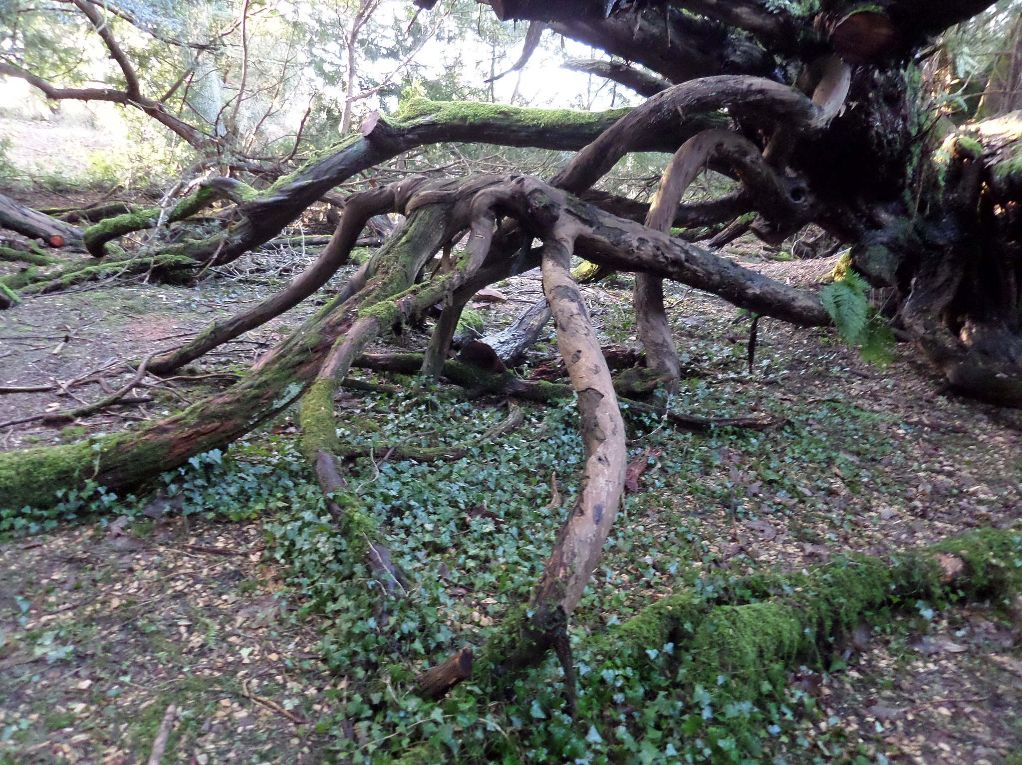 Magick, Mortality, and the Roots of Meaning