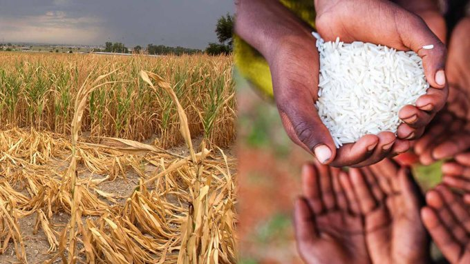 crop failure and food shortage