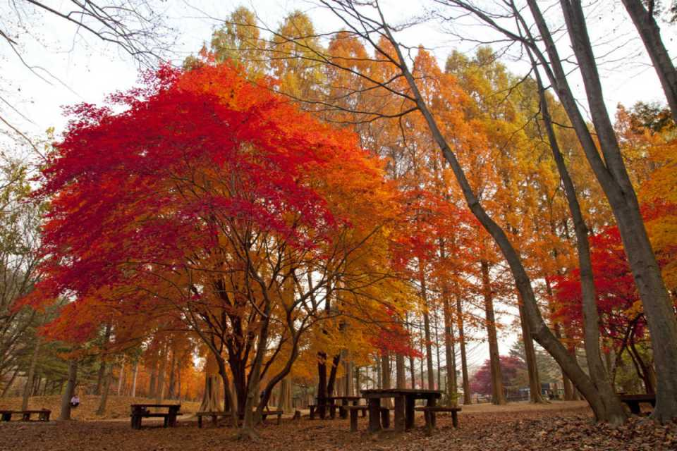 KoreaHoneymoon-NamiIsland-Flickr