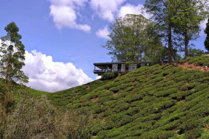 BOH Tea Plantation and Tea Center 1-JE Tunnel