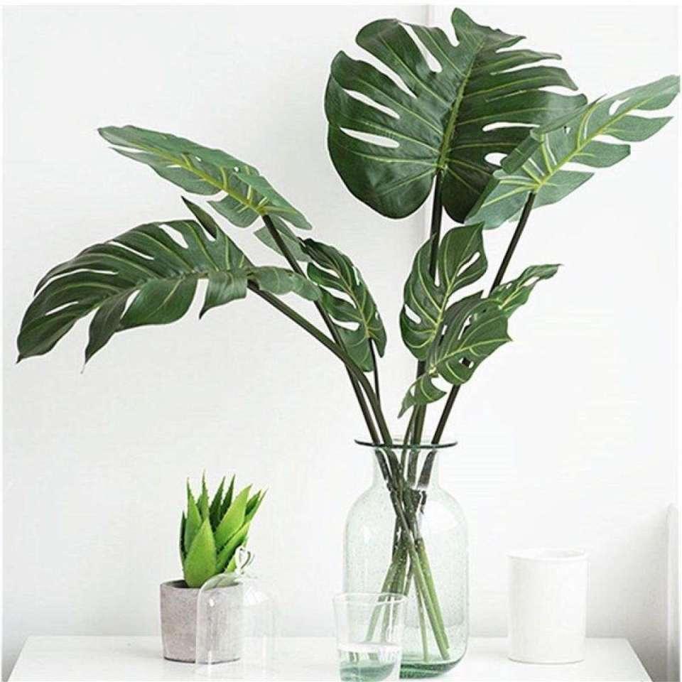 20 Best Indoor Plants in the Philippines   Best of Home 20