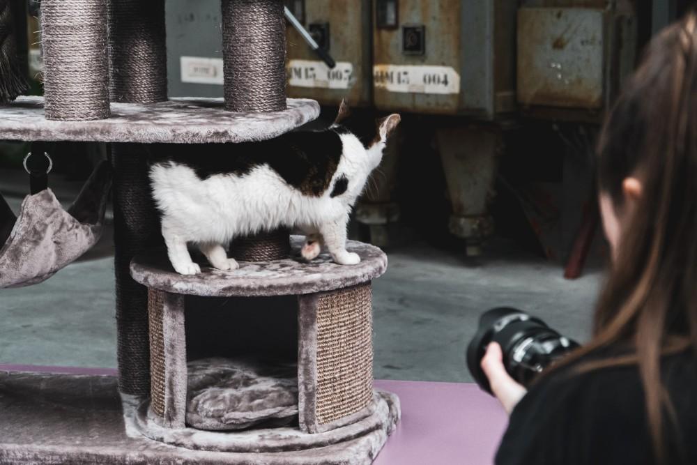 Mainan Kucing Terbaik 2021