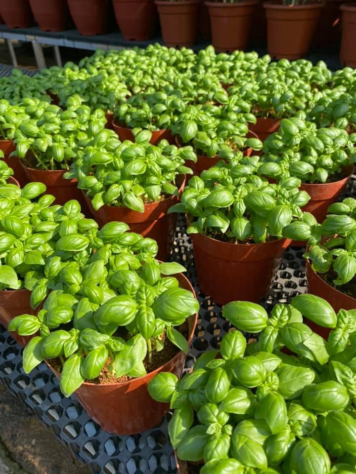 Song Lang Garden garden supply