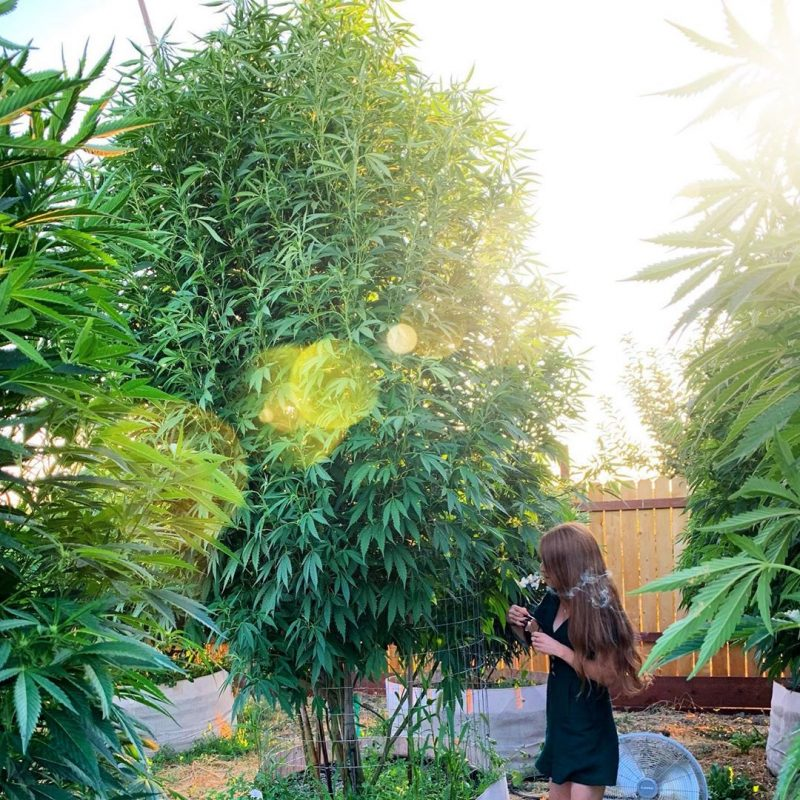 cb338044967817025b7bb29986b9f221 800x800 1 The Weed Blog - Cannabis News, Culture, Reviews & More