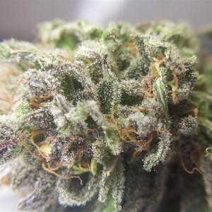 Dank Marijuana Nugget