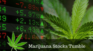Cannabis stocks tumbling in early days of legalization