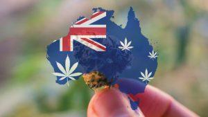 Australia's first ever crop of taxpayer-funded pot: Historic medical marijuana greenhouse opens in Sydney