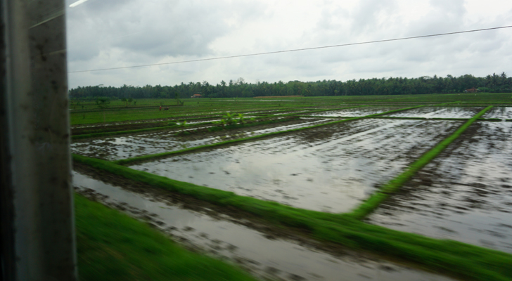 Enroute to Yogyakarta - view from the window