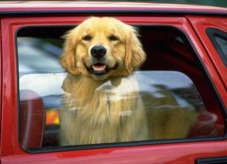 Never leave animals or children unattended in vehicles.