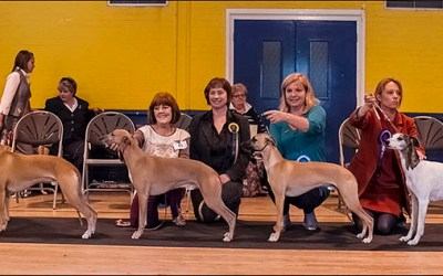 September Whippet Club show schedules
