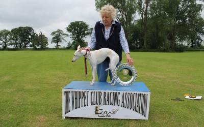 The Whippet Club 2014 2nd WCRA Championships 2014 – Results and Pictures