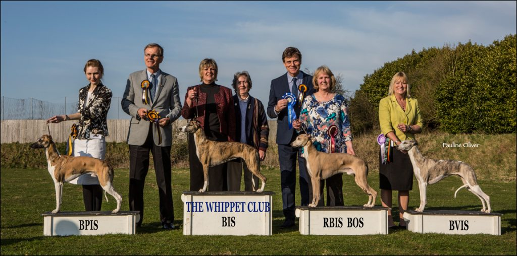Best In Show line up whippets