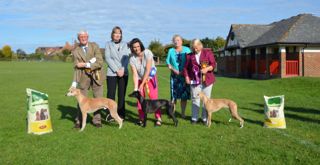 Whippet Club Open Show September 2017