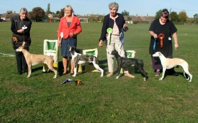 Whippet Club Open Show September 2018 – Dog Critique