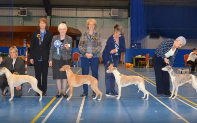 The Whippet Club Championship Show 6th April 2019 – Dog Critique
