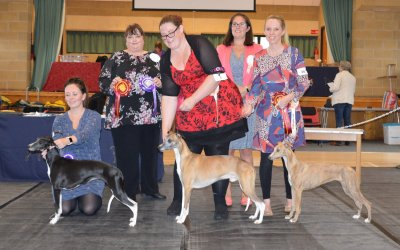 The Whippet Club Open Show, 28 September 2019 – Dog Critique