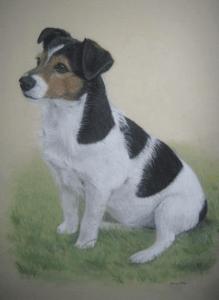 Diana Webber - Terrier