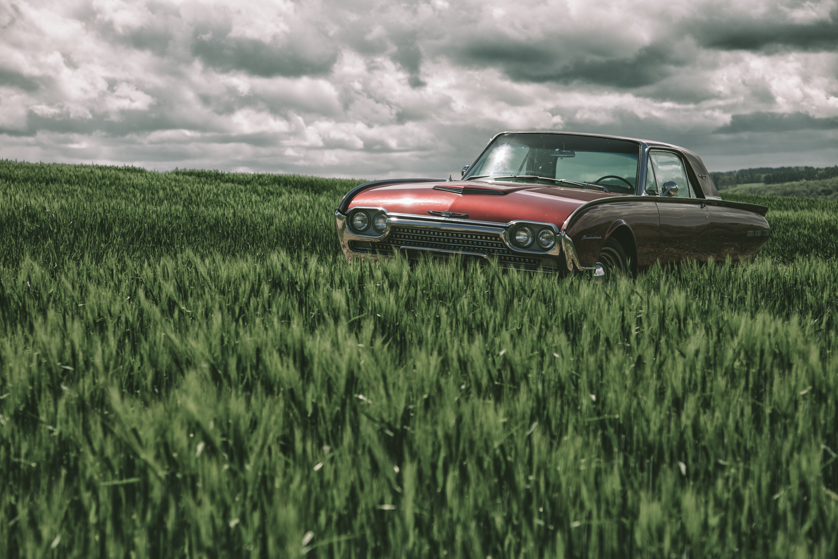 red classic american ford thunderbird in a field on a sunny day