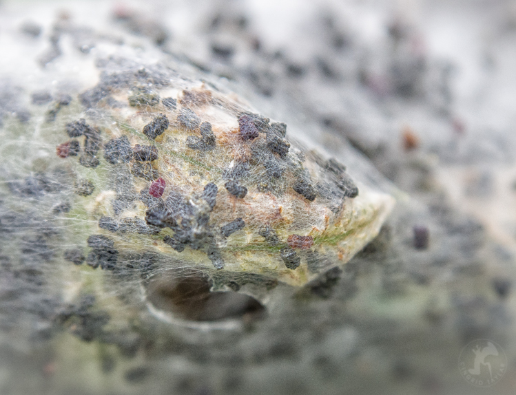 Nest - ©ingridtaylar