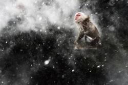 Jasper Doest, The Netherlands, 'Snow moment'