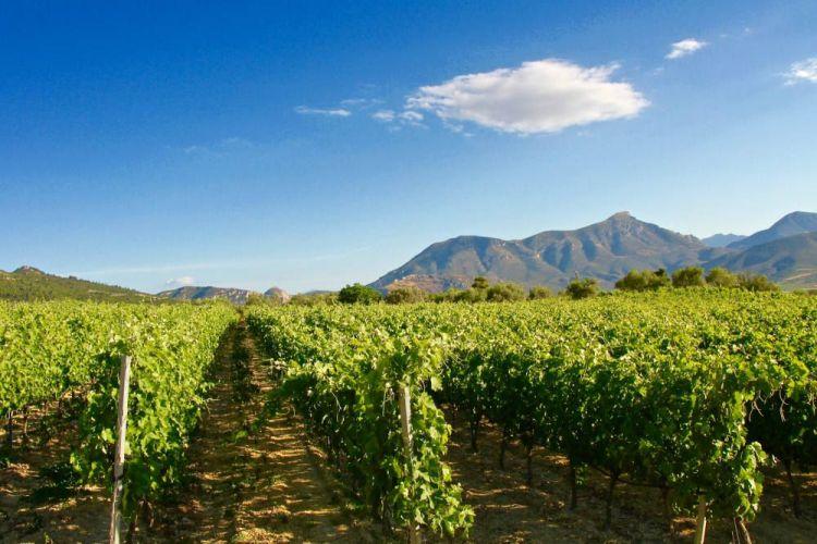 This Nemea vineyard is at Giannis Tselepos' Ktima Driopi estate.