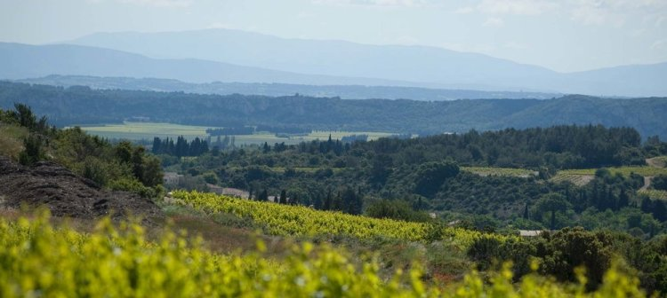 The southern Rhône - where the best of God's handiwork meets the best of humankind's handiwork at Domaine de la Mordorée