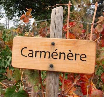 Carmenere-sign-200p