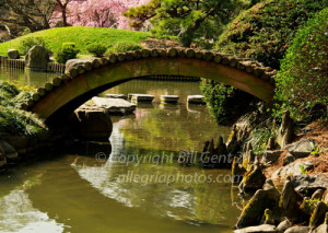 A bridge in the Brooklyn Botanical Garden