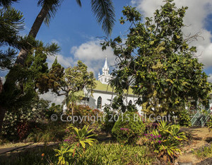 Looking through the trees towards the Painted Church, Honaunau, Hawaii