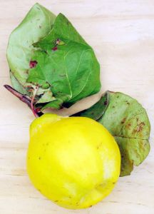 quince yellow, pomegranate red… the fall