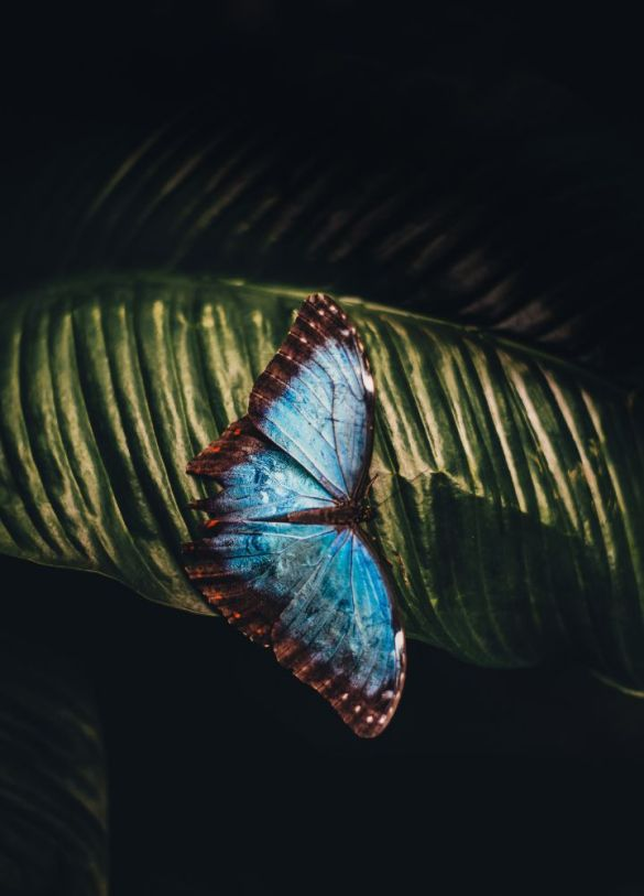not every caterpillar turns into a butterfly
