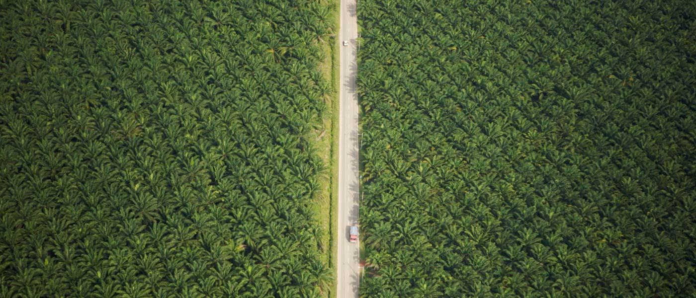 Nemico pubblico numero uno: olio di palma