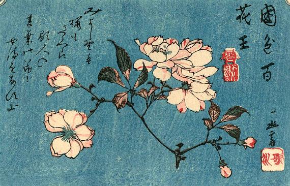 Haiku sakura