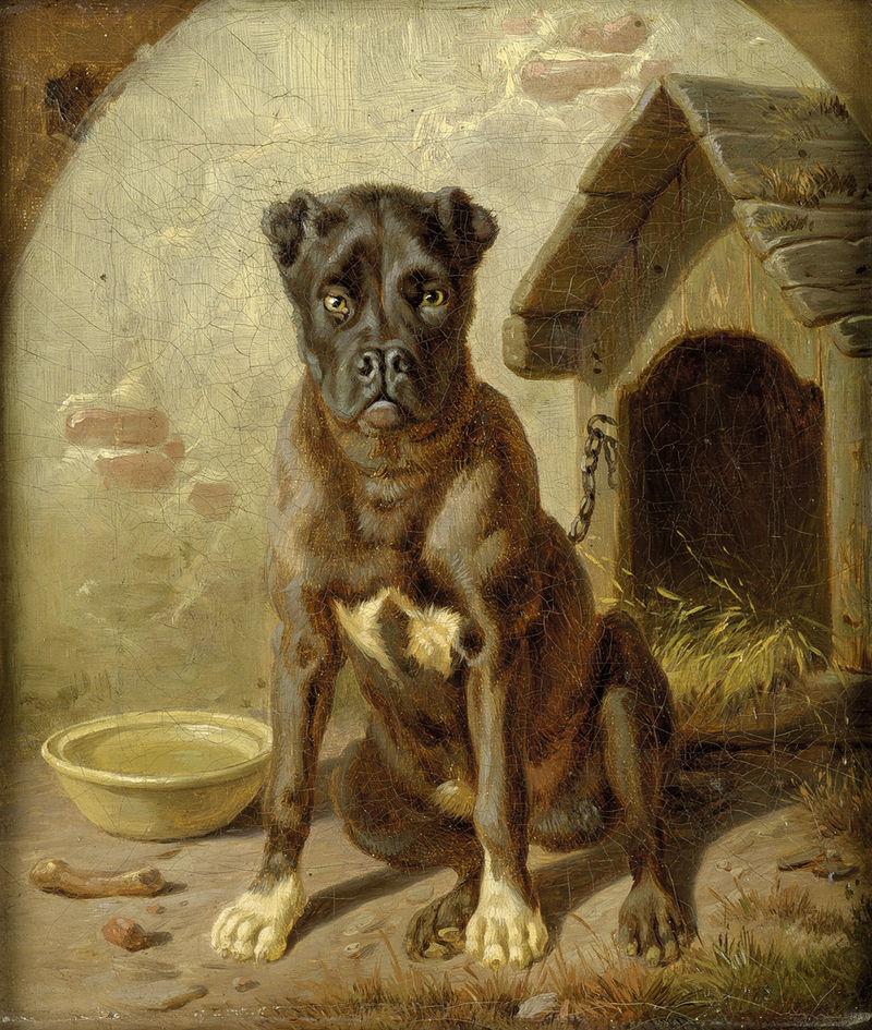 Cane: alcune domande al veterinario