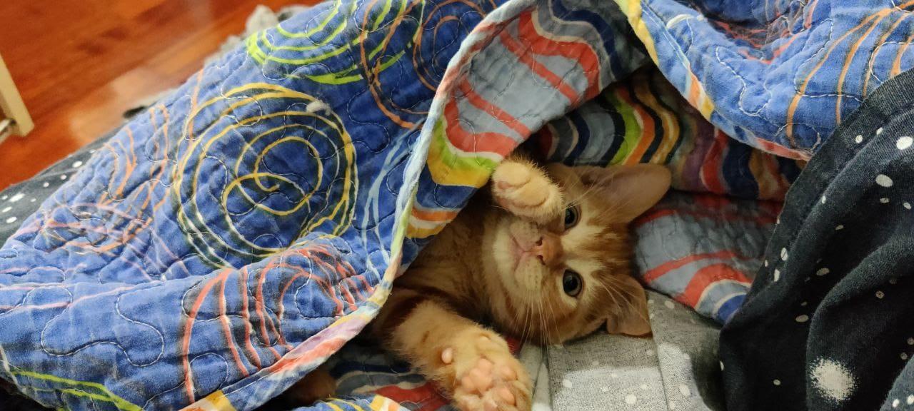 Gatto: alcune domande al veterinario