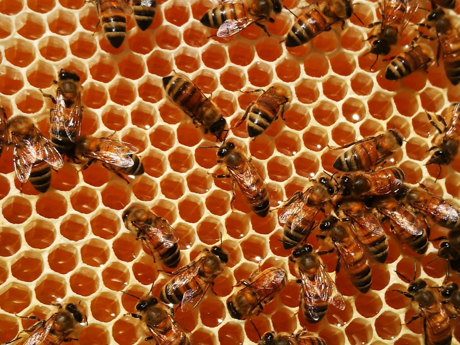theWise incontra gli apicoltori Davide ed Elisa