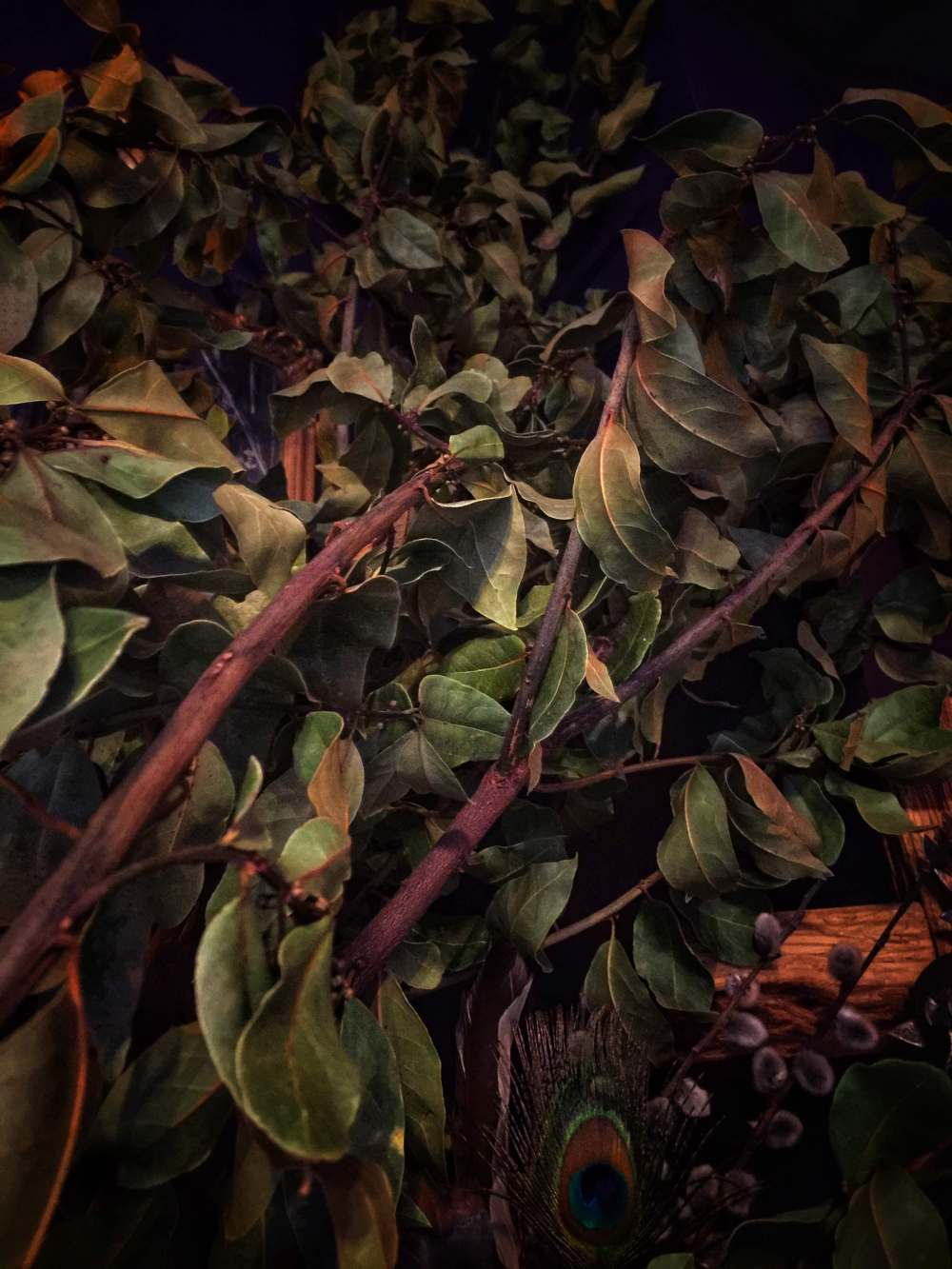 Witches Herbs Bay Leaf