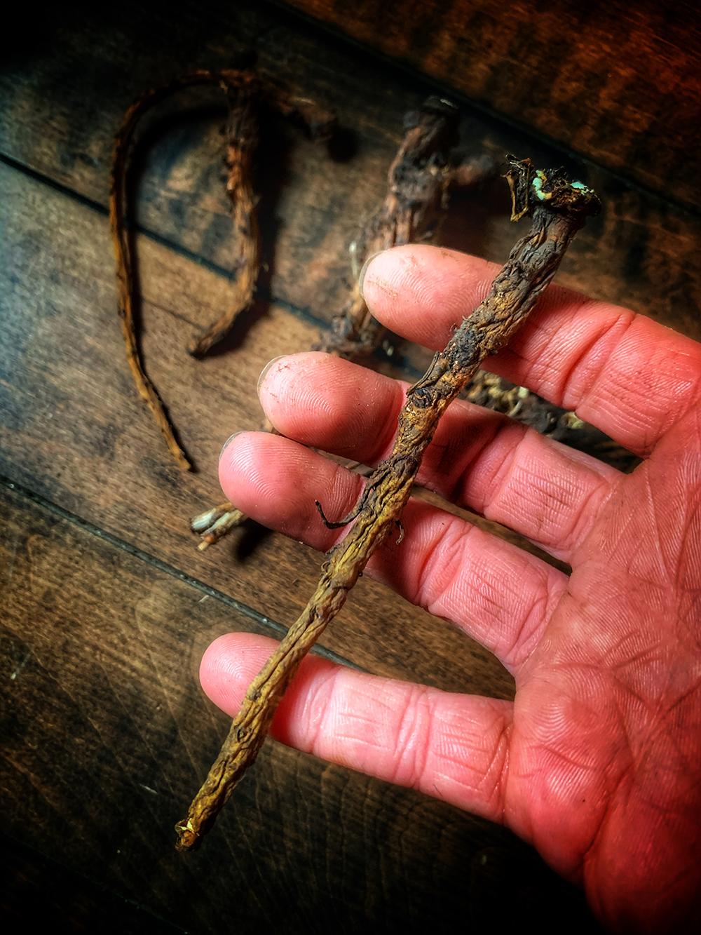 Dandelion Root Whole