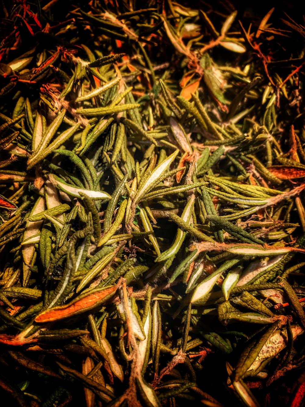 Muskeg Labrador Tea