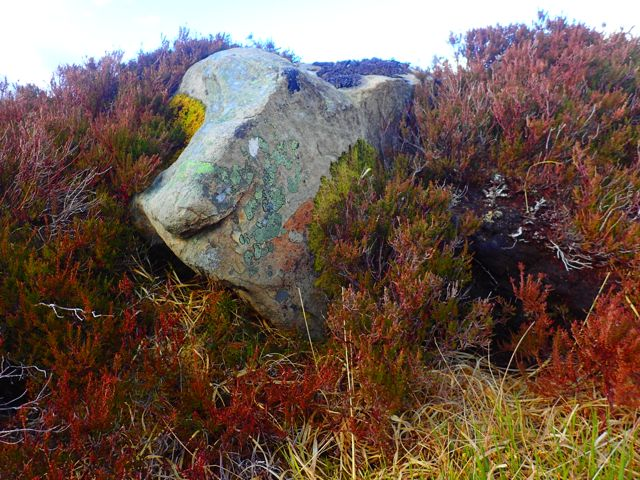 Beautiful lichen colours in this rock Which I thought looked like a wild boar?