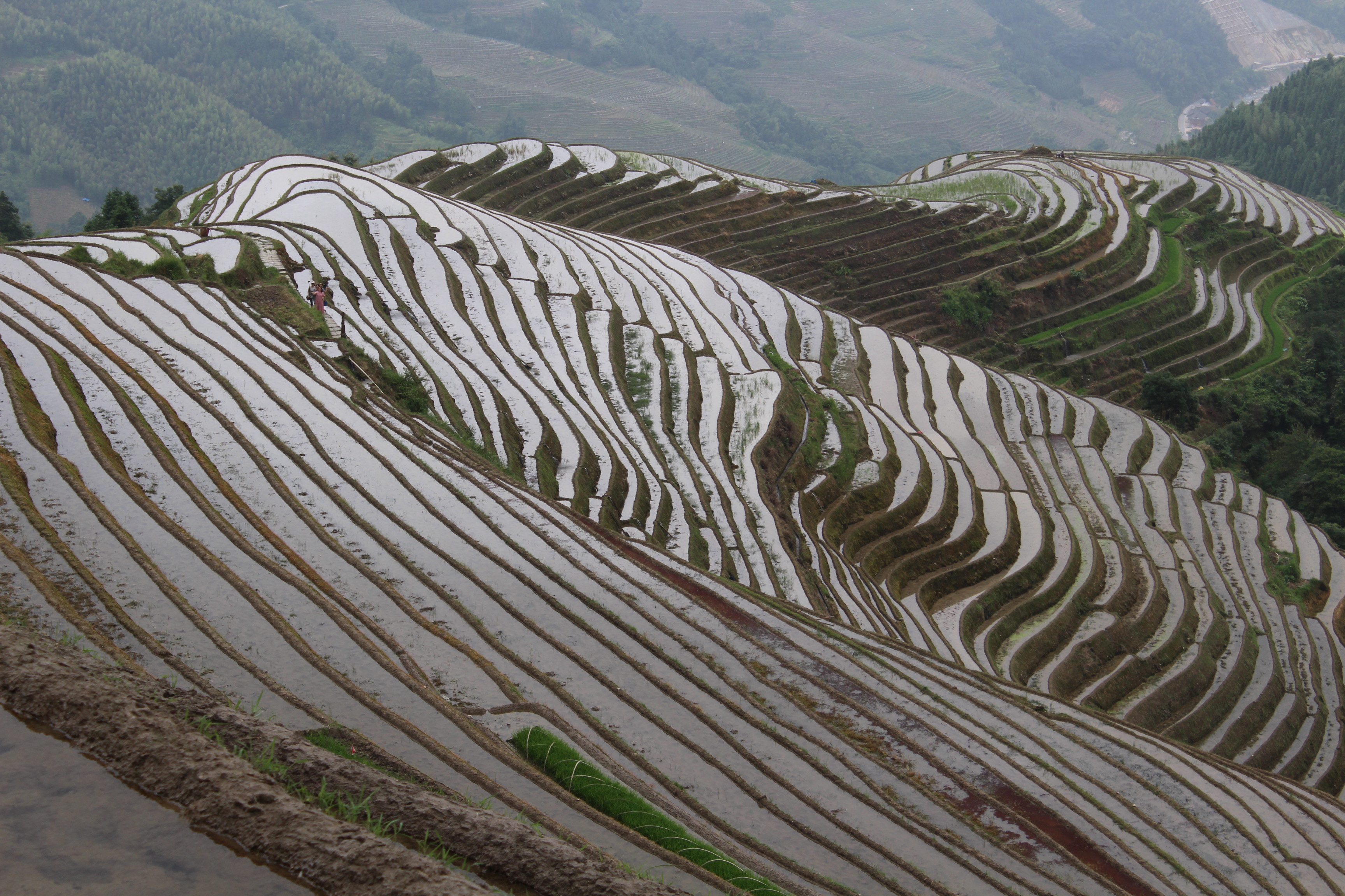 longji-rice-terrace-5