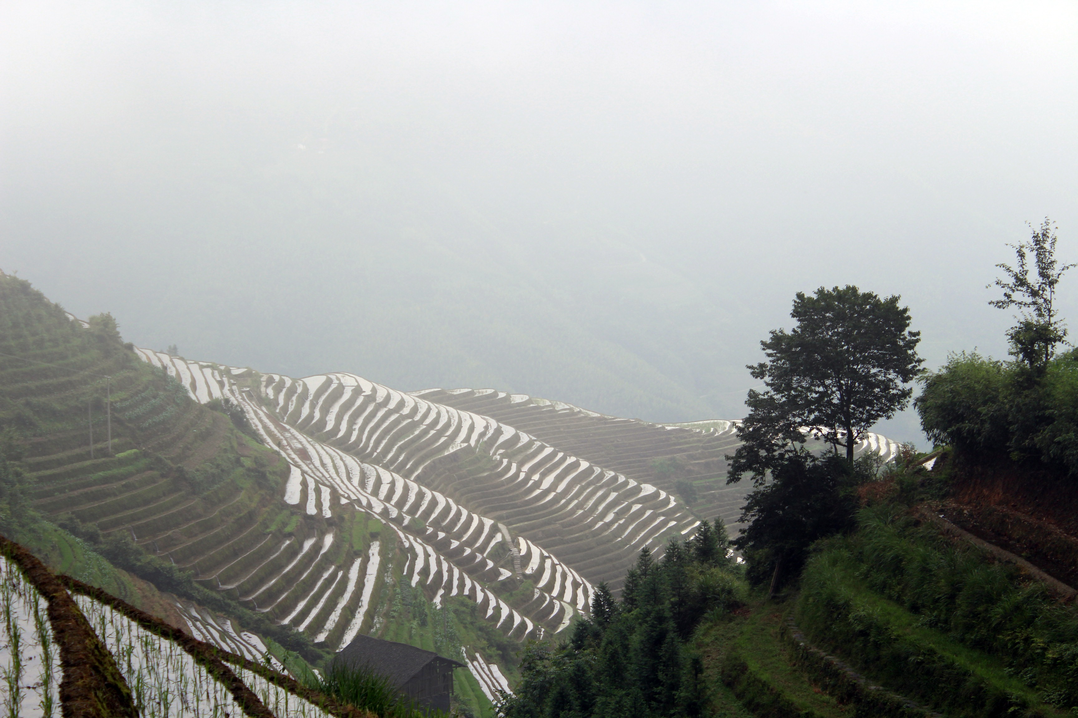 longji-rice-terrace-8