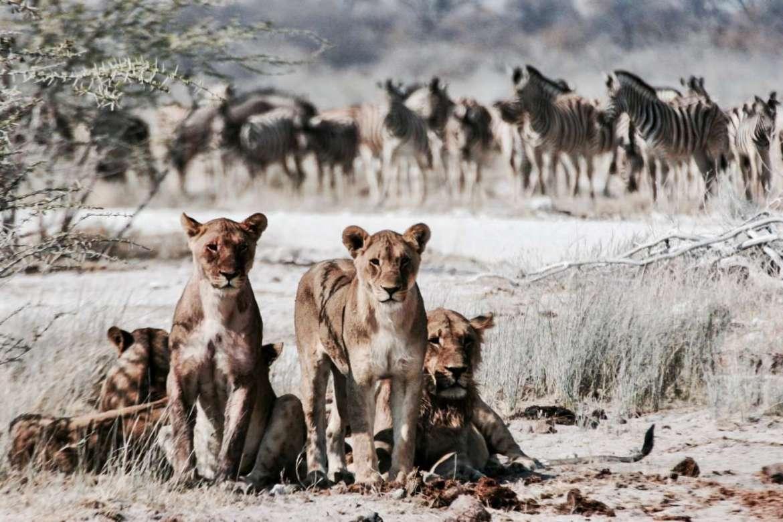 botswana-safari-africa-the-world-up-closer