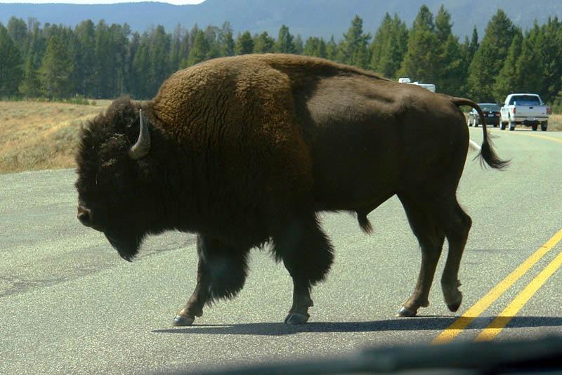 Parque Nacional Yellowstone Parque Nacional Yellowstone, cómo visitarlo en dos días yellowstone