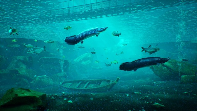 the catch carp and coarse underwater